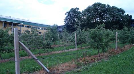 Naš voćnjak